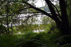 Randonnée enchantée et imaginaire en forêt de Brocéliande en Bretagne