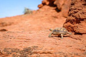 St-George (Utah, USA) - Randonnée Turtle Wall - Red Cliffs Desert Reserve