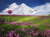 Quel est l'intérêt du GR5 des Alpes?
